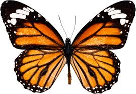 the meaning of the in which you saw butterfly