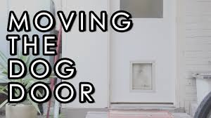 Cat Door For Interior Door How To Install A Pet Door In A Wall Back Entrance Reno Part 1