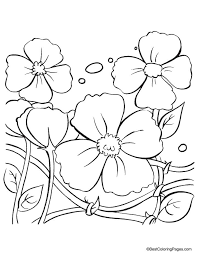 5 best images of free printable poppy flower coloring printable