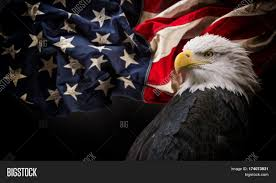 Bald Eagle On Flag American Bald Eagle Symbol Image U0026 Photo Bigstock