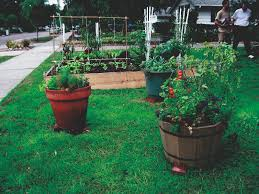 Vegetable Gardens In Florida by Green Gardening Florida Vegetables From Seed To Table U2013 The