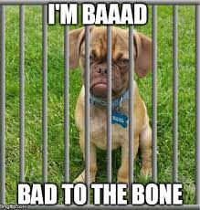 Grumpy Dog Meme - and i don t do squat for no scooby snacks imgflip