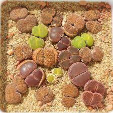 ent de cuisine haut 26 best izbové rastliny images on succulent plants