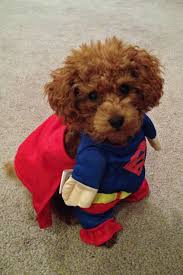 halloween background for pets don u0027t laugh i u0027m part of the super hero dog brigade we u0027ll be at