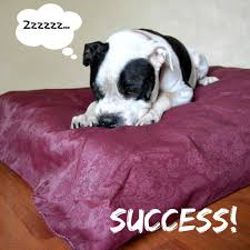 Dog Beds With Cover From Crib Mattress To Dog Bed With No Sew Diy Cover Your Sassy Self