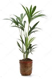 ornamental plants stock photo pepbaix 3051739