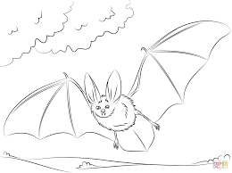townsend u0027s big eared bat coloring page free printable coloring pages