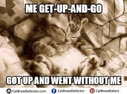 Grumpy Cat Sleep Meme - kitten memes photos funny cute angry grumpy cats memes pinterest