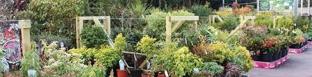 Homebase Garden Squire U0027s Garden Centre In Badshot Lea Farnham