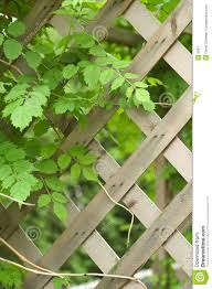 Trellis With Vines Vine And Trellis Stock Image Image Of Vegetation Trellis 5081