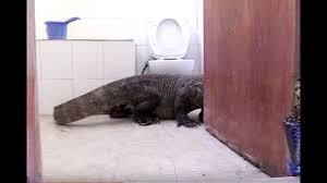 Two Polar Bears In A Bathtub Komodo Dragon In Bathroom Planet Earth Ii Youtube