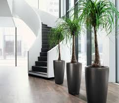 indoor office plants for office environment office architect