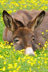 Kingmont Mobile Home Park Houston Tx 312 Best Donkey Fever Images On Pinterest Donkeys Animals And