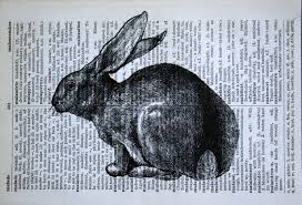 rabbit pictures to print