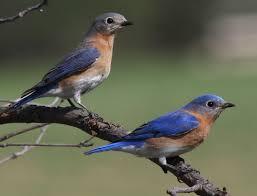 Nc Backyard Birds Redneck Progressiveredneckpreacher