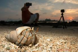 wide angle macro photography by shawn m miller okinawa nature