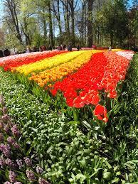flower garden in amsterdam birthday tulips in amsterdam aaron and nicky u0027s travels