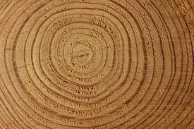 nature wood log with circles patterns premium texture and background