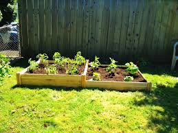 fantastic starting a vegetable garden from scratch pictures