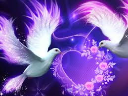 4k ultra hd love birds wallpapers quality wallpapers