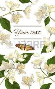 Jasmine Tea Flowers - 464 jasmine tea cliparts stock vector and royalty free jasmine