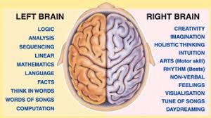 Right Side Human Anatomy Neuroanatomy What U0027s The Difference Between 2016 Quora