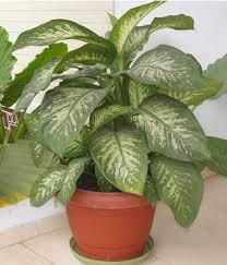 killer house plant warning