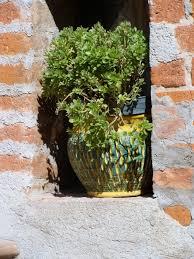 Ceramic Garden Art Free Images Rock Plant Flower Pot Green Red Ceramic Soil