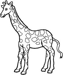 giraffe coloring giraffe free printable coloring pages animals