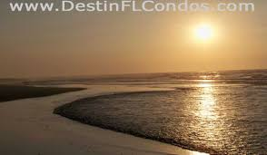 destin florida pet friendly vacation beach condos
