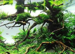 Aquascape Fish 54 Best Aquaticplants Biotope Aquascape Fish Images On Pinterest