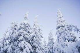 snowy trees and blue cloudless sky free stock photo