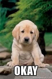 Sad Okay Meme - okay sad puppy meme generator