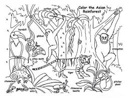 rainforest coloring sheets free coloring sheet inside tropical