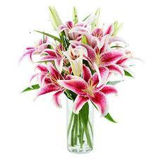 fresh flowers kabloom fresh flowers bouquet of 8 stargazer lilies in a glass