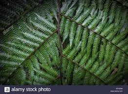 Free Picture Leaf Nature Fern Up Of Fern Leaves Nature Texture Background Macro Green