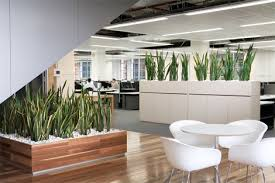 plants for office 11 deadly enemies of your indoor plants