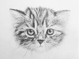 drawn kittens sketched pencil and in color drawn kittens sketched