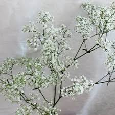 bulk baby s breath yellow wedding flower guide aster flower company and flower