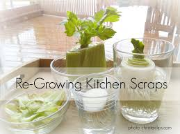 re growing kitchen scraps my frugal garden christa clips