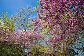 diarmuid gavin small wonder trees for a small garden