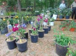 Botanical Gardens Dothan Alabama Nurseries Dothan Area Botanical Gardens