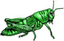 grasshopper lab