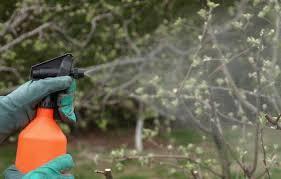 dormant to spray or not to spray baca s trees