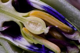 flowering plants reproduction u0026 fertilization video u0026 lesson