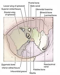 Parts Of Ethmoid Bone Middle Cranial Fossa Earth U0027s Lab