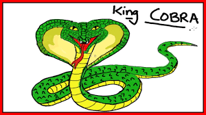 easy drawing lessons how to draw a king cobra