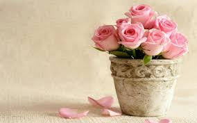 Pink Roses Wallpaper by Pink Rose Wallpapers Images Bhstorm Com