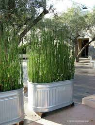 Backyard Ideas For Privacy Best 25 Privacy Screen For Deck Ideas On Pinterest Patio Ideas