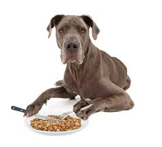 feeding a boxer dog how much should a purebred great dane cost video simply for dogs